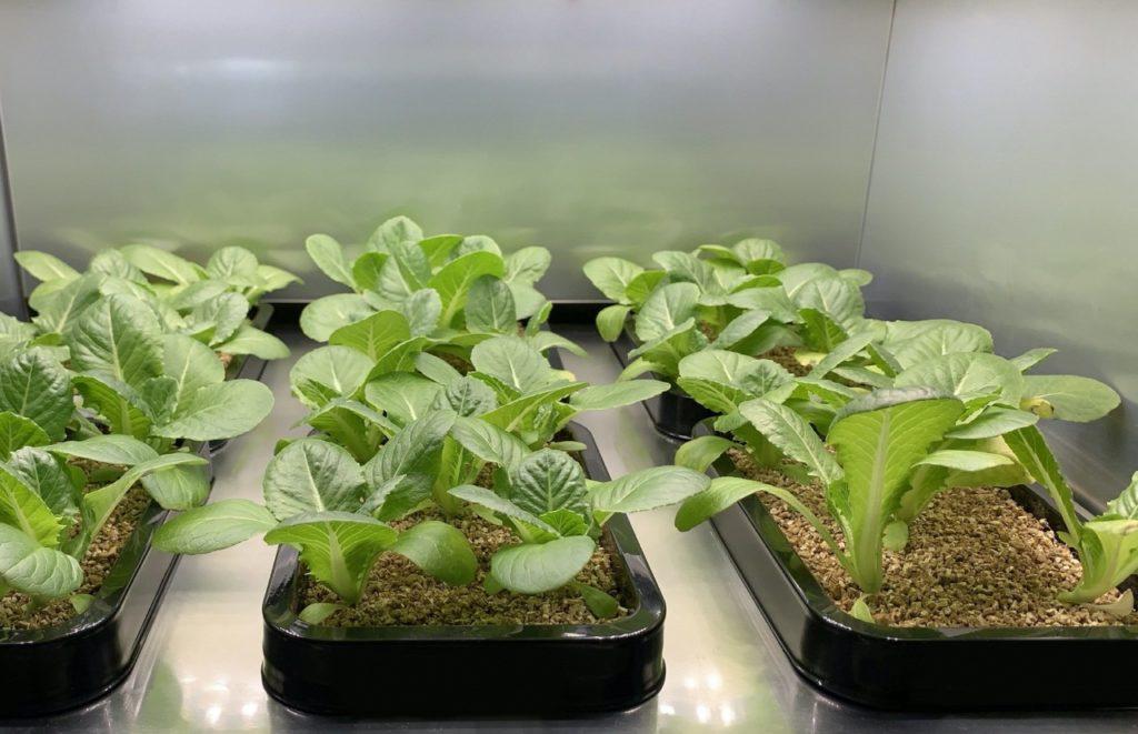 Giardinaggio indoor