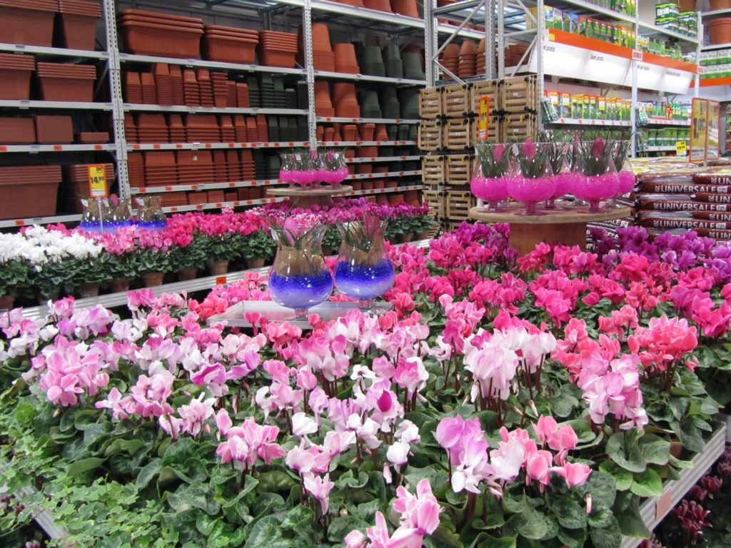 fiori in esposizione